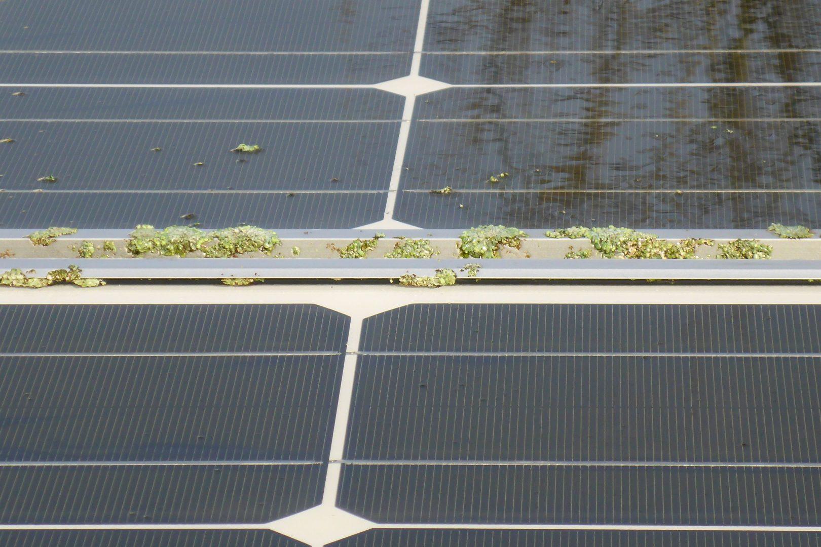 Flechten Solarreinigung