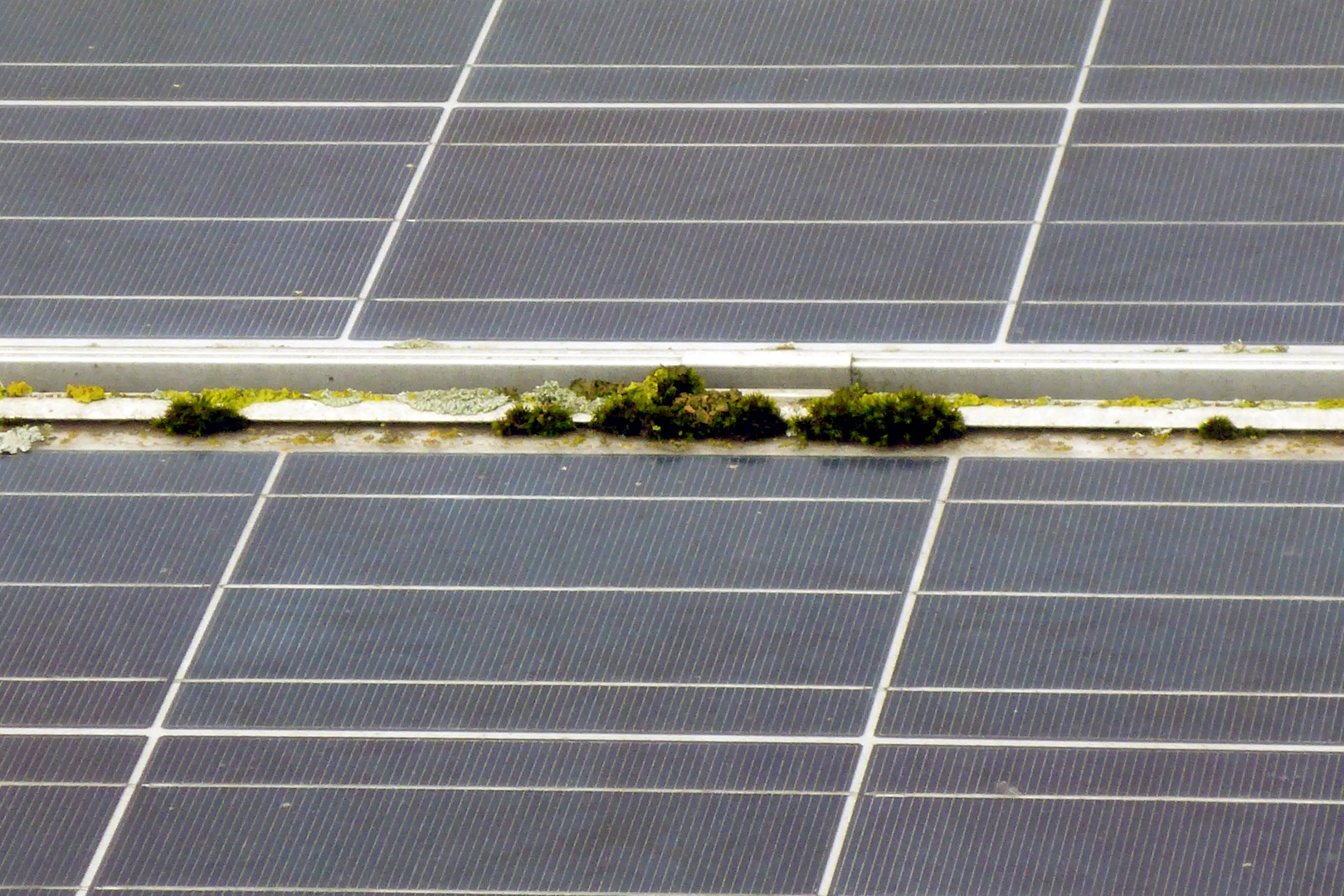 Flechten und Moos auf Photovoltaikanlagen durch Ausschwemmen nachhaltig beseitigen.